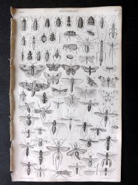 Goldsmith 1853 Antique Print. Entomology Insects 34